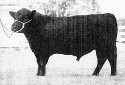 Roustabout, sire of WRR Fritz